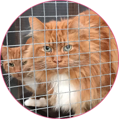 Cliffe Cattery | Cattery in Rochester Medway Kent